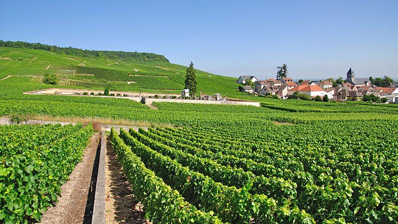 Fransk vingård