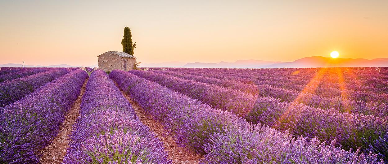 Bilsemester längs småvägar i Provence