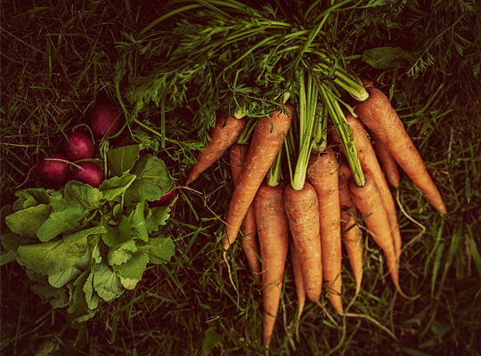 Ekologiska morötter