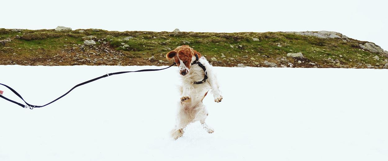 Hund hoppar